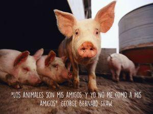 vegan George B. Shaw