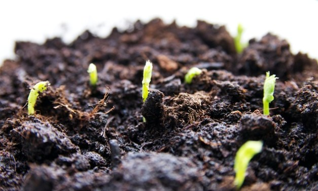 3-stappenplan voor het kweken van erwtenscheuten