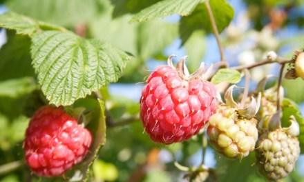 Plukhof Wiekevorst – vers fruit uit het vuistje