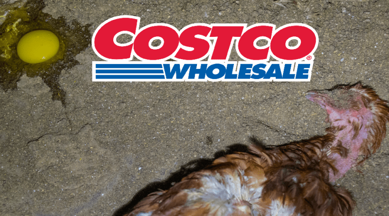 Costco sues DxE Direct Action Everywhere over protesting and investigations