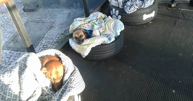 A bus station Brazil opens its doors for stray dogs to stay warm