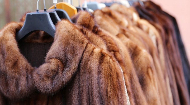 In another big victory in the fight against fur sixteen brands have banned fur in their fashion lines!