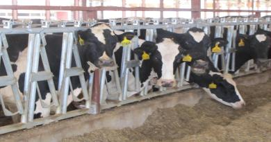 Missouri Ag-gag law resurfaces as state representative tries to get bill through again.