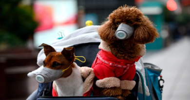A Pomeranian in Hong Kong has been quarantined after being discovered to be carrying the deadly Novel Coronavirus. There are fears that the dog may be capable of passing the disease on.