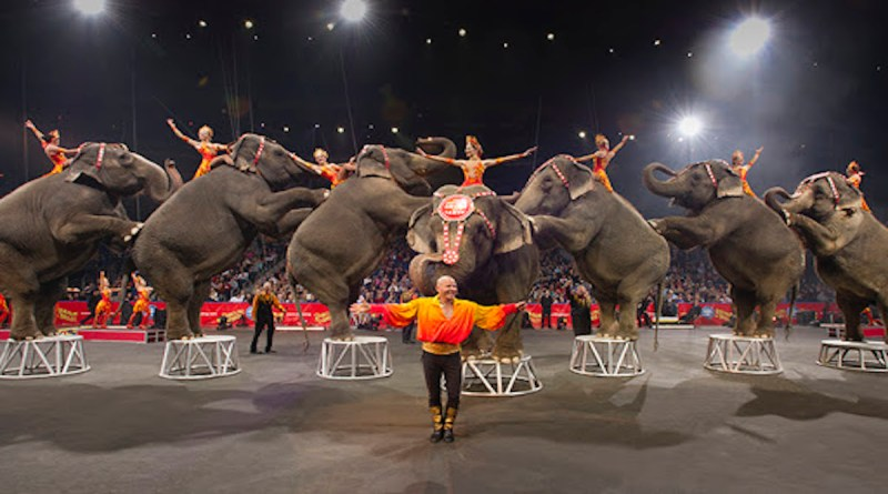 Los Angeles has officially passed a bill that bans the use of exotic and wild animals for the purpose of entertainment.