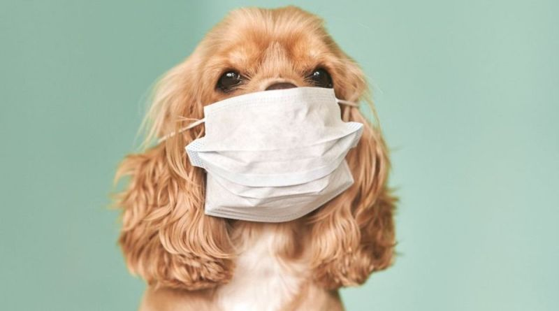 Another dog in Hong Kong has tested positive for the Novel Coronavirus COVID-19 in the midst of the current pandemic.