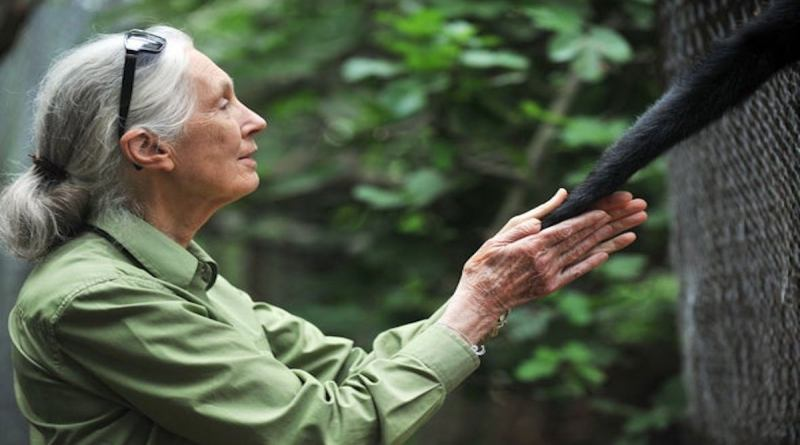 "Jane Goodall the famous world-renowned British primatologist is speaking out on behalf of animals during the coronavirus pandemic saying that humanity's stark disregard for nature and our outright ""disrespect for animals"" caused it."