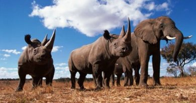 Elephant Ivory and rhino horn sales have been banned in Washington DC our nations capital thanks to activists.