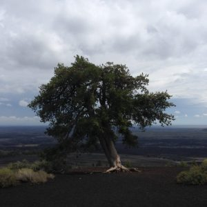 Craters of the Moon Idaho Tree | Vegan Nom Noms