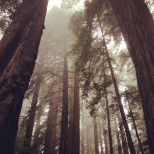Redwoods California | Vegan Nom Noms