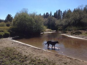 South Lake Tahoe Creek | Vegan Nom Noms