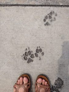 Paw Prints in Cement New Orleans | Vegan Nom Noms