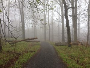 Sächische Schweiz Fog Wurzelweg- Vegan Nom Noms