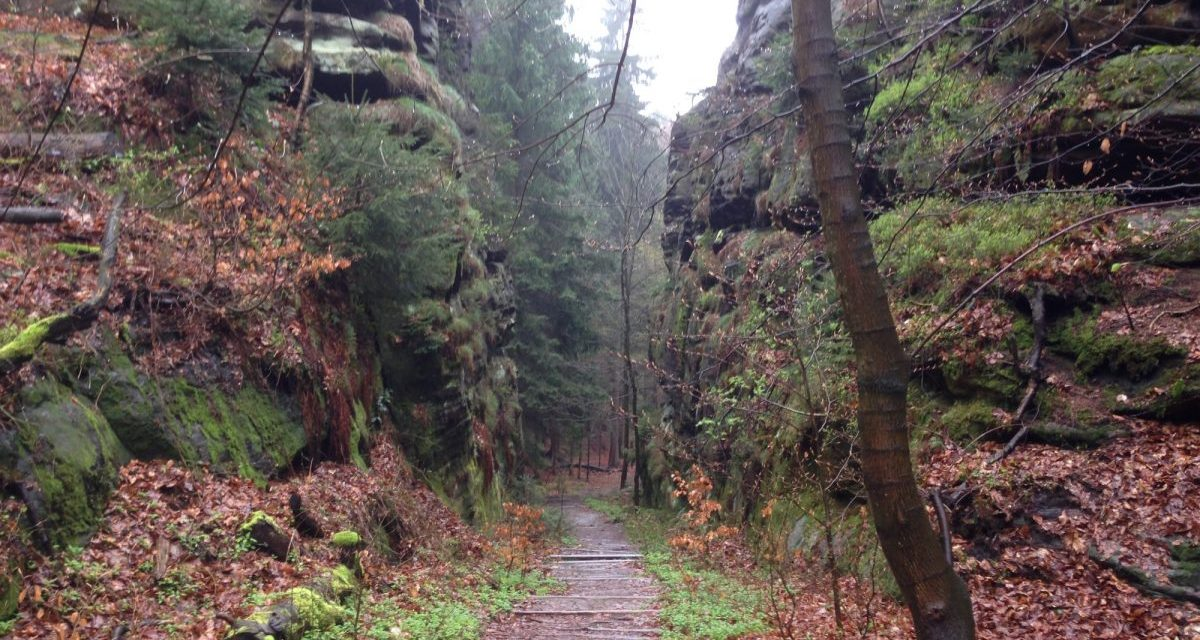 Vegan in the Mountains: Bergwirtschaft& Herberge Großer Winterberg