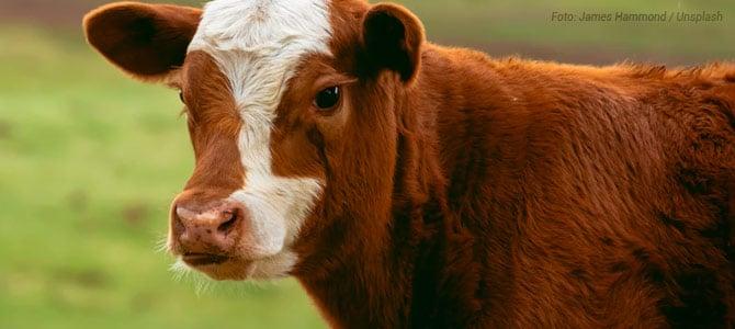 Em 2040, 60% Da Carne Não Virá De Abate Animais, Aponta Uma Das Maiores Consultorias Do Mundo