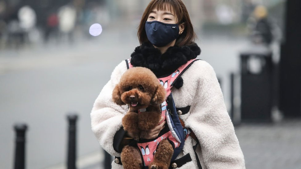 Mulher Usa Mascara Enquanto Leva Cachorro Para Passear Em Wuhan Na China 26022020093252559