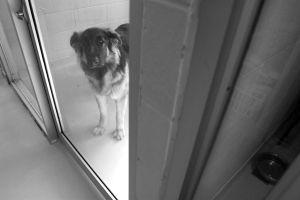 Hurricane Katrina rescue dog. Jo-Anne McArthur/We animals