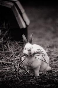 A happy bunny