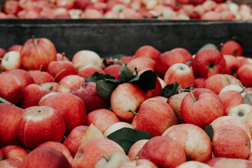 Best Apples for Juicing