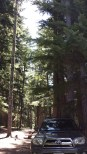 Frog Lake Campground site