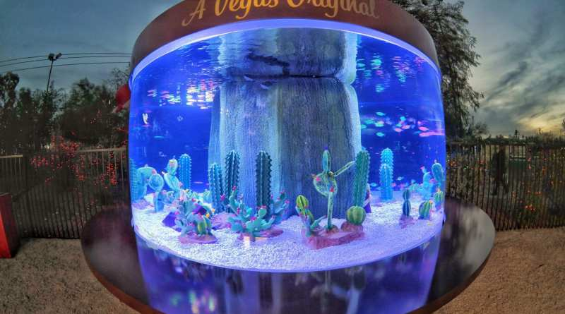 Tanked Aquarium at Ethel M Chocolates