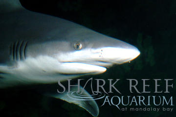 Shark Reef Aquarium at Mandalay Bay, Las Vegas