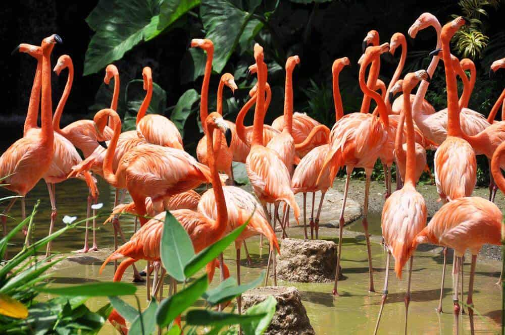 Flamingo Wildlife Habitat - Las Vegas Free Attractions