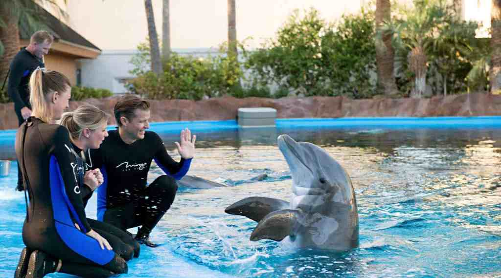 Siegfried and Roy Secret Garden - Family Things to do in Las Vegas