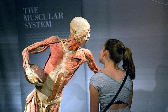 """Exclusive Access for School Groups Adds """"Field Trip"""" Element to an Otherwise Unusual School Year at REAL BODIES at Bally's"""