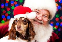 The District at Green Valley Ranch Hosts Pet Photo Night with Santa Claus on December 12