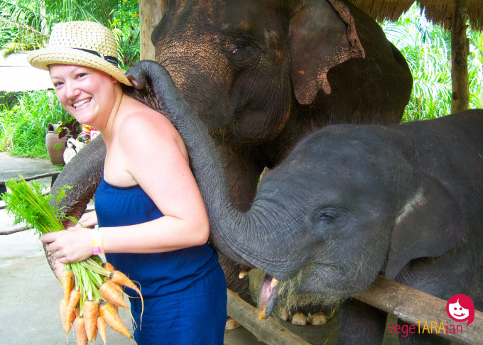Bali Safari elephant feeding