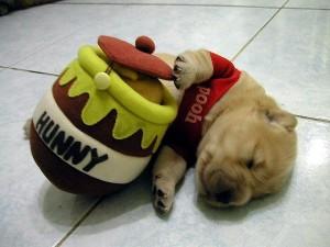 Puppy Pooh