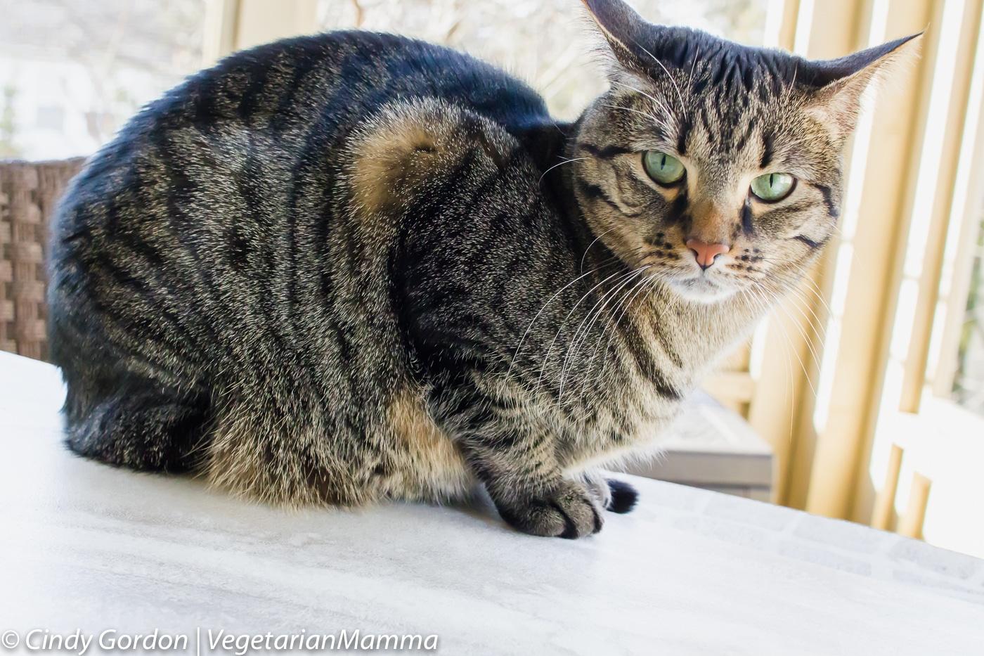 a cat sitting on a ledge