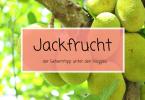 Jackfrucht Jackfruit