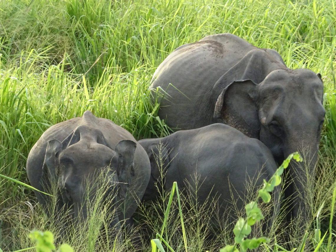 Vegan in Sri Lanka - An Ethical Eaters Guide