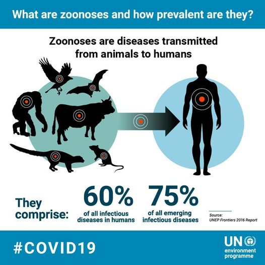 unep covid 19 zoonosis animals to humans