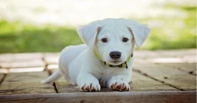 Cães podem prever quando os donos estão prestes a ter um ataque de epilepsia, diz estudo