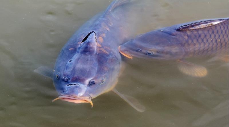 Ministério da Agricultura do Brasil pede fim de lista de peixes ameaçados