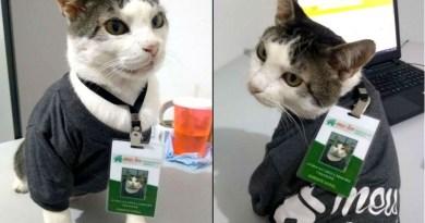 Gato ganha crachá, uniforme e vira gerente