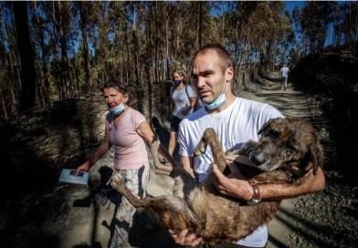 Ativistas relatam terem sido impedidos de salvar animais mortos em incêndio