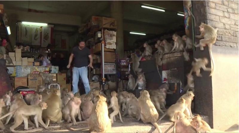 Cidade da Tailândia é tomada por macacos na quarentena dos humanos