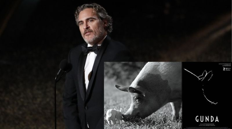 Joaquin Phoenix lançará documentário pró-vegano 'Gunda'