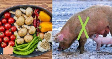 Ser vegano deixa de financiar a morte de até 200 animais por ano