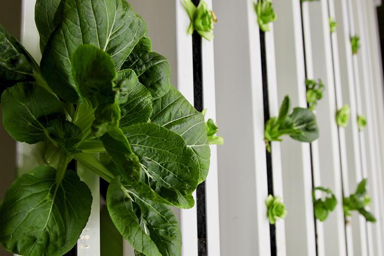 Gröna plantor i rad på höjden