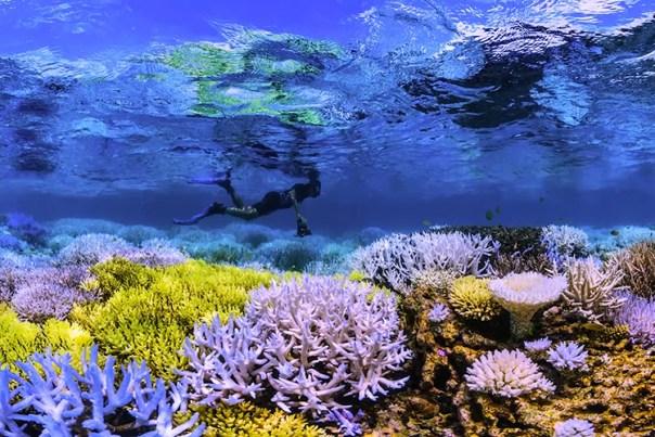 En dykare över korallrev