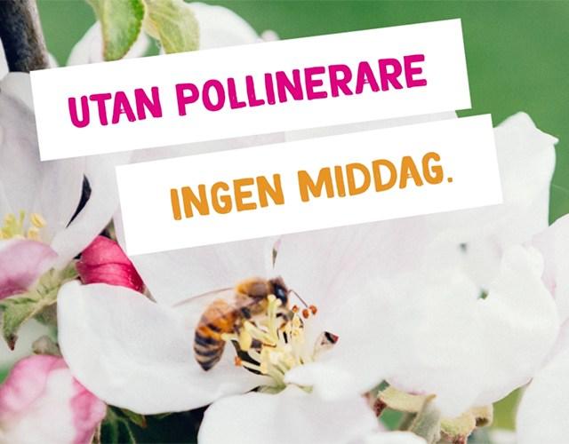 """Ett bi i en blomma med texten """"Utan pollinerar ingen middag"""""""