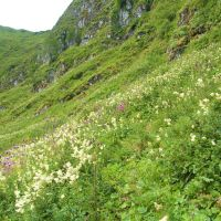 Grazing exclusion and vegetation change in an upland grassland with patches of tall herbs