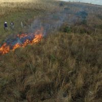 Heterogeneity decreases as time since fire increases in a South American grassland