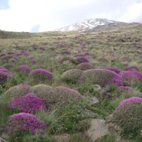 Scale-dependent patterns and drivers of plant diversity in steppe grasslands of the Central Alborz Mts., Iran