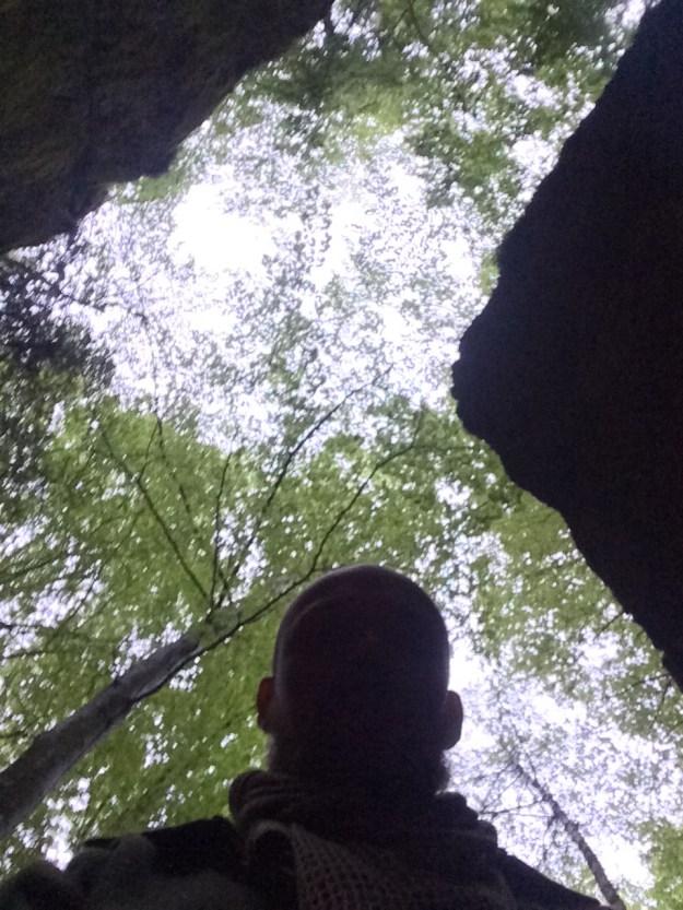 Høyt og luftig tak i bøkeskogen.